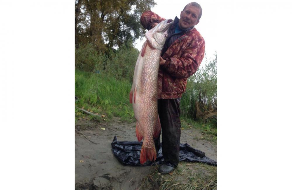 Рыбак из Новосибирска поймал ограмную щуку