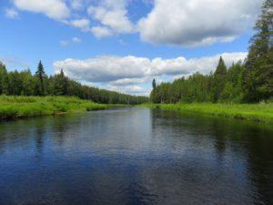 Река Юла в Архангельской области, лето