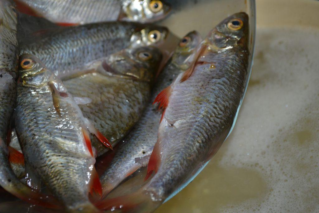 Рецепт ухи из речной рыбы - Шаг 4